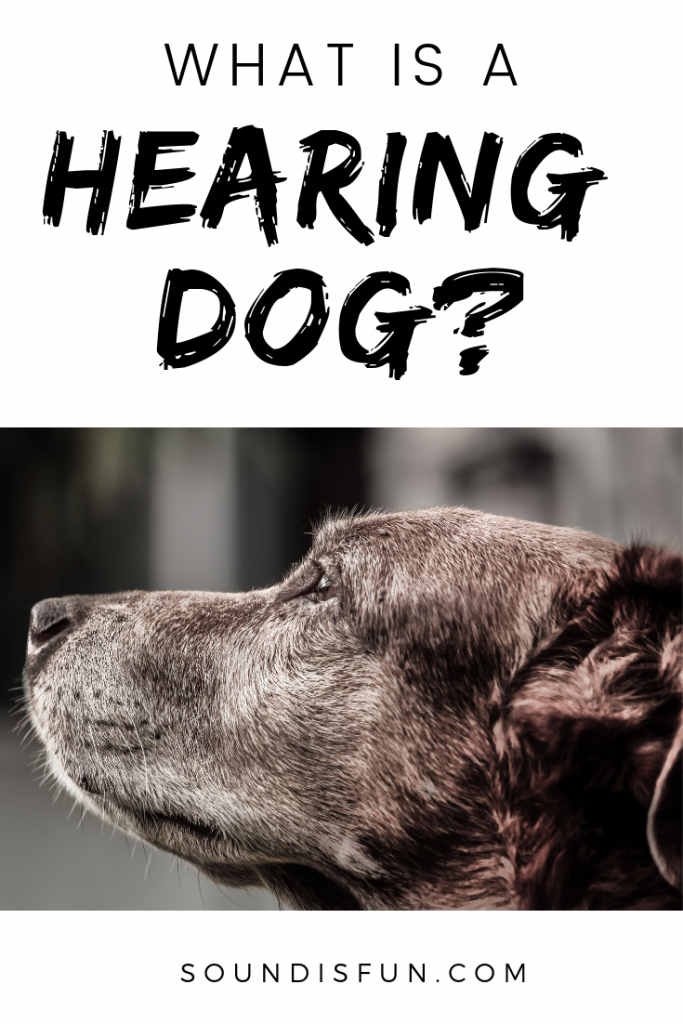 What is a hearing dog?